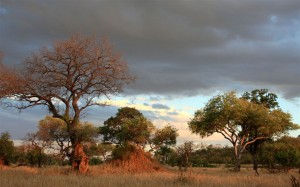 Kruger National Park Landscape (Photo: John Wesson)